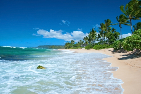 Foto de Untouched sandy beach with palms trees and azure ocean in background - Imagen libre de derechos