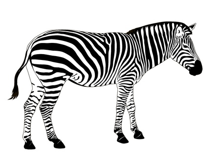 Illustration pour Illustration of  zebra. Vector EPS 8 - image libre de droit