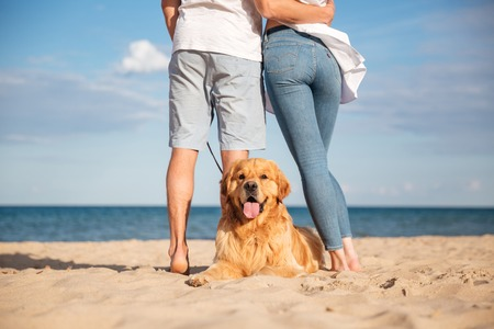 Back view of cute dog lying on the beach near young couple standing and hugging
