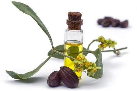 Foto de Jojoba (Simmondsia chinensis)oil, leaves, flower and seeds isolated on withe beckground - Imagen libre de derechos