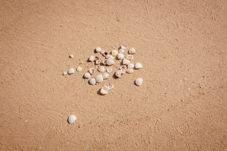 Photo for Pile of seashells on a red sand of Azove sea shores lying in disorder. - Royalty Free Image