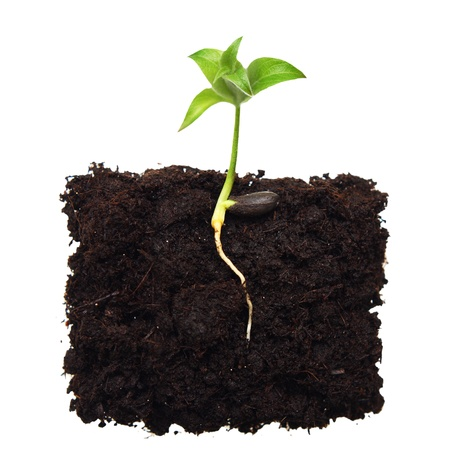 Photo pour Small apple tree in ground with root  - image libre de droit