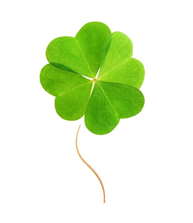 Foto de Green clover leaf isolated on white background. - Imagen libre de derechos