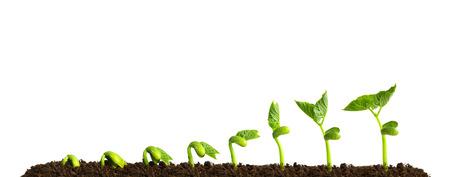Foto de Growing plant in soil isolated on white background. - Imagen libre de derechos