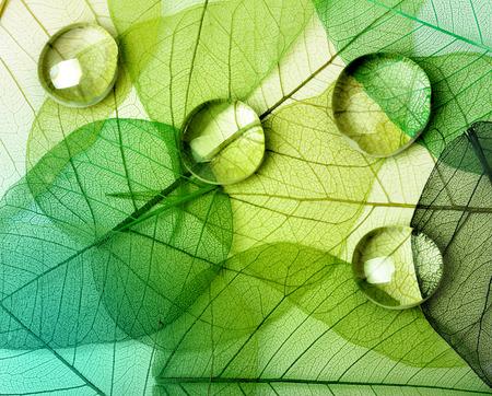 Foto de Green leaf macro with water drops - Imagen libre de derechos