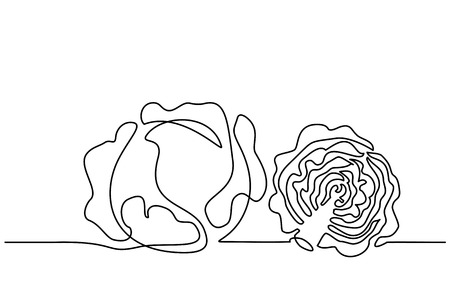 Ilustración de Continuous one line drawing. Vegetables two cabbage. Vector illustration - Imagen libre de derechos