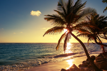 Photo for Palm tree on the tropical beach, sunrise shot - Royalty Free Image