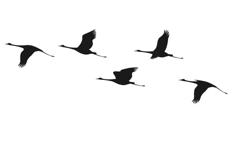 Illustration pour Silhouette of flying flock of cranes.  - image libre de droit