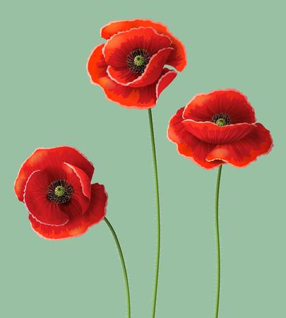 Illustration pour Three red poppy flowers.  - image libre de droit