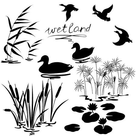 Illustration pour Set of silhouettes of water plants and ducks. - image libre de droit