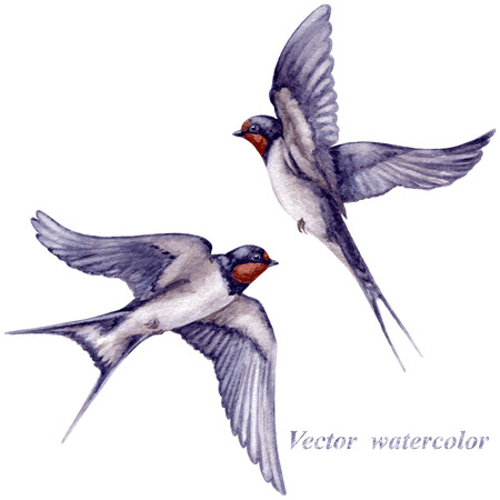 Illustration pour Watercolor two  flying swallows isolated on white background. - image libre de droit