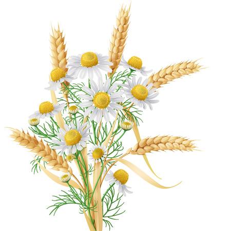 Ilustración de Bunch of  wild chamomile flowers with wheat ears. - Imagen libre de derechos