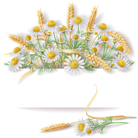 Illustration pour Bunch of  wild chamomile flowers and wheat ears  with space for text. - image libre de droit