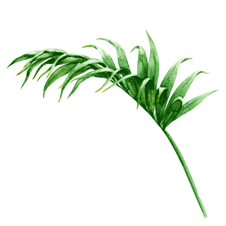 Illustration pour Hand drawn tropical plants. Watercolor palm frond. Green leaf isolated on white. - image libre de droit