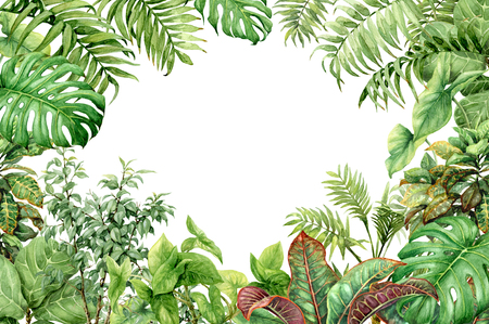 Foto de Hand drawn  branches and leaves of tropical plants. Natural green background with space for text. Watercolor floral frame. - Imagen libre de derechos
