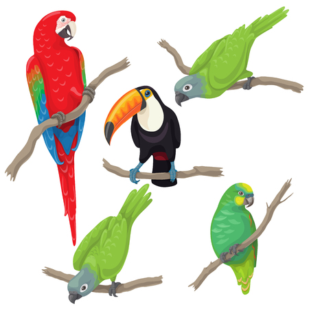 Illustration pour Vivid tropical birds set. Green parrots, red-and-green macaw and toucan sitting on branches isolated on white background. - image libre de droit