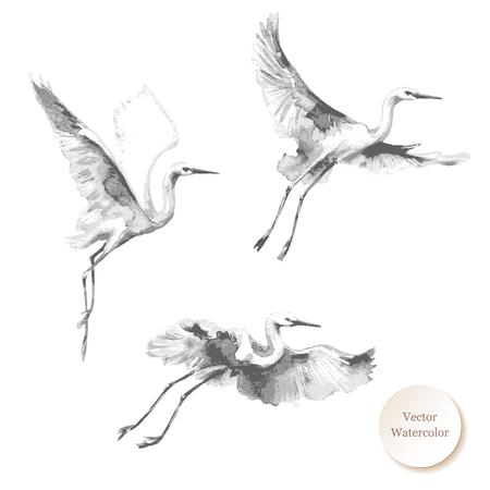 Ilustración de Watercolor painting.  Hand drawn illustration. Flying storks isolated on white background. Bird flight monochrome  vector sketch.   - Imagen libre de derechos