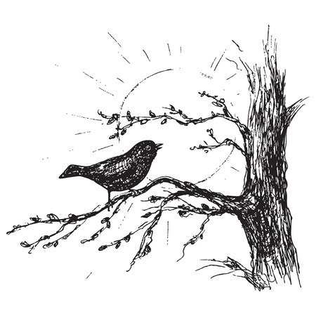 Illustration pour Hand drawn songbird sitting on tree branch. Spring is coming illustration.Black and white singing bird and sun vector sketch. - image libre de droit