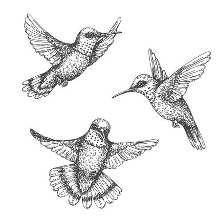 Illustration for Hand drawn humming birds isolated on white. Monochrome flying hummingbirds set.  Front and side view colibri flight. Vector sketch. - Royalty Free Image