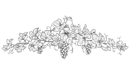 Illustration pour Hand drawn text divider made with monochrome grape branches with leaves and berries. Black and white decorations with grapes. Vector sketch. - image libre de droit