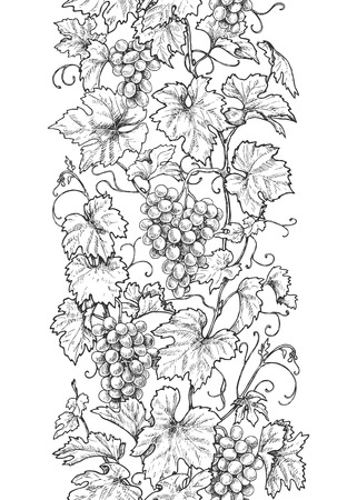 Illustration pour Seamless line vertical pattern made with monochrome grape branches with leaves and berries. Hand drawn black and white border with grapes in row. Vector sketch. - image libre de droit
