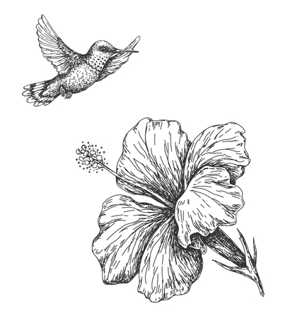 Illustration pour Hand drawn  monochrome humming bird and hibiscus isolated on white. Small hummingbird flying near flower.  Vector sketch. - image libre de droit