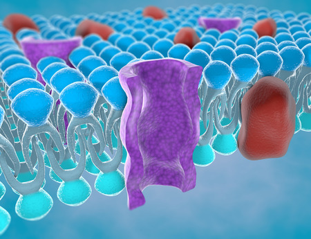 Foto per Structure of the plasma membrane of a cell - Immagine Royalty Free