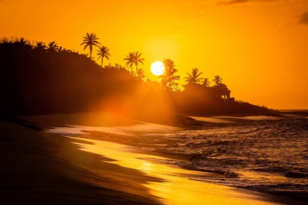 Foto de Tropical sunset at the beach with palms at dawn - Imagen libre de derechos
