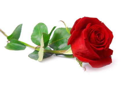 Photo for Beautiful red rose isolated on white background - Royalty Free Image