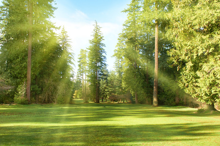 Foto de Green park with trees in park under sunny light. Natural spring environment - Imagen libre de derechos