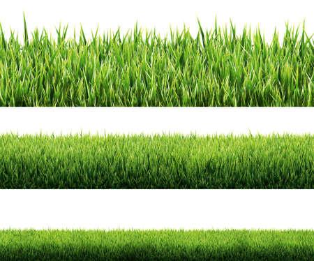Foto de grass isolated - Imagen libre de derechos