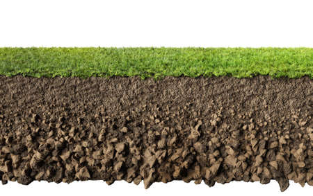 Photo for grass and soil profile - Royalty Free Image
