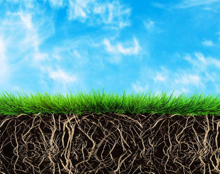 Photo pour grass with roots and soil - image libre de droit