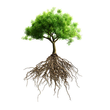 Illustration pour tree with roots vector - image libre de droit