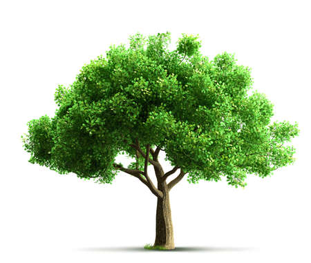 Photo for tree isolated - Royalty Free Image