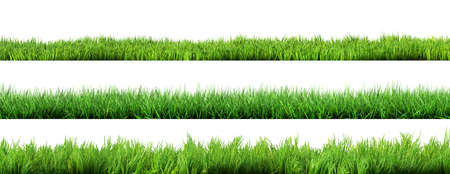 Photo pour grass isolated - image libre de droit
