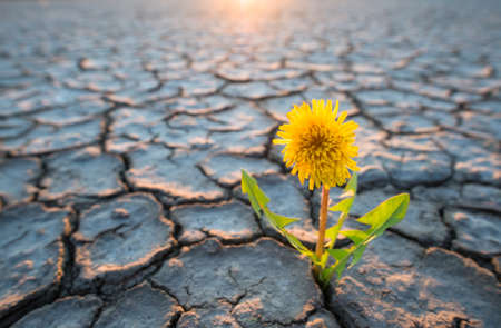Photo for plant growing in desert drought concept - Royalty Free Image