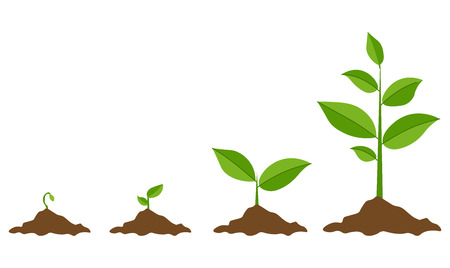 Ilustración de Phases plant growing. Planting tree infographic. Evolution concept. Sprout, plant, tree growing agriculture icons. Vector illustration in flat style - Imagen libre de derechos