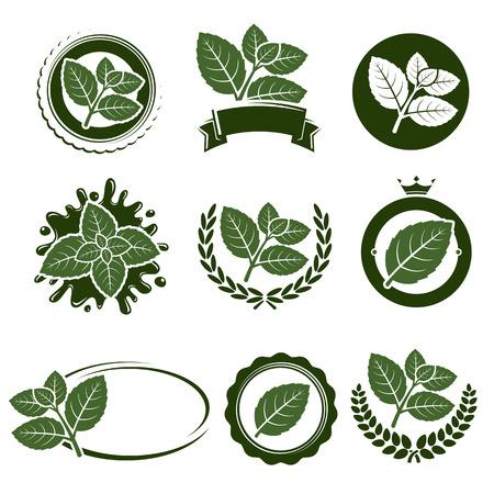 Illustration for Mint leaves label set.  - Royalty Free Image