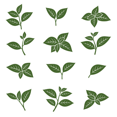 Illustration pour Green tea leaf collection set. Vector - image libre de droit