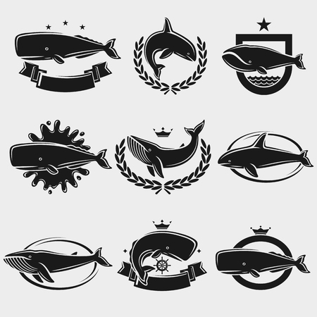 Illustration for Whale label and icons set. Vector illustration - Royalty Free Image