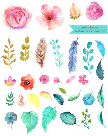 Illustration pour Watercolor floral collection, mint and rose for beautiful design - image libre de droit