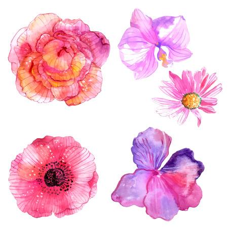 Illustration pour Beautiful Watercolor flower set over white background for design - image libre de droit