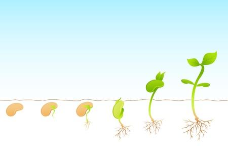 Illustration pour illustration of stages of growth of plant - image libre de droit