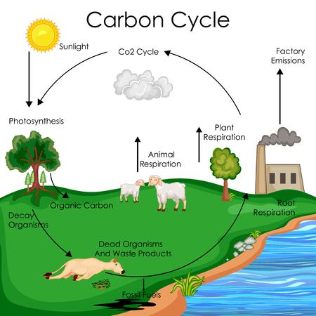 Ilustración de Education Chart of Biology for Carbon Cycle Diagram - Imagen libre de derechos