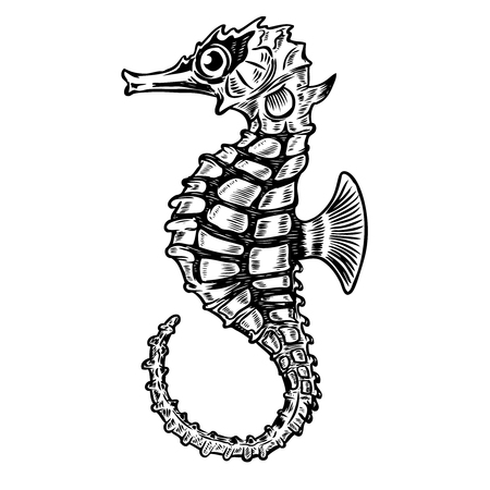 Illustration for Seahorse illustration isolated on white background. Design element for poster, t-shirt. Vector illustration - Royalty Free Image