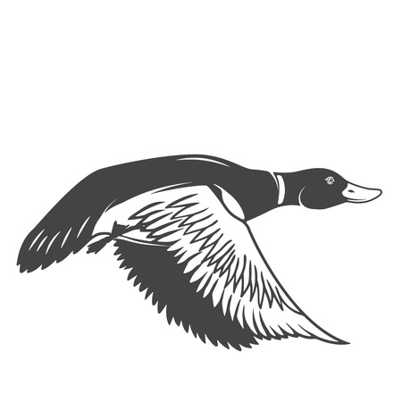 Illustration for Wild duck icon isolated on white background. Design elements for logo, label, emblem, sign. Vector illustration - Royalty Free Image
