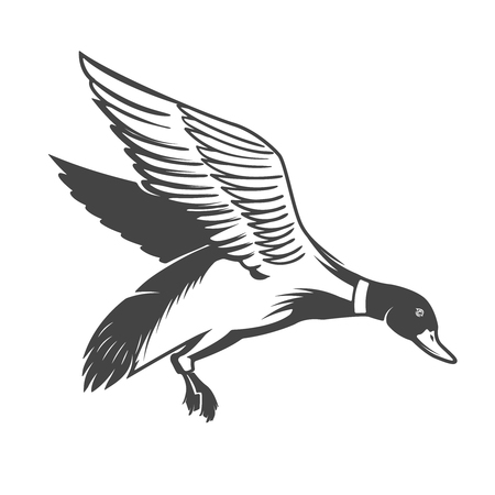 Illustration pour Wild duck icon Vector illustration - image libre de droit