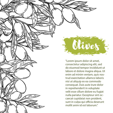 Ilustración de Vector border with colorful olives. The pattern with space for text. For flyer, booklet for advertising and design. - Imagen libre de derechos