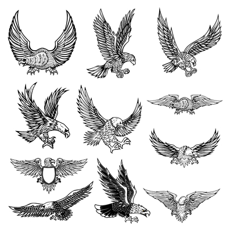 Illustration pour Illustration of flying eagle isolated on white background. Vector illustration. - image libre de droit